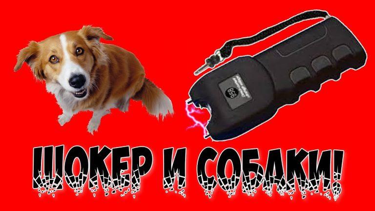 Электрошокер от собак: принцип действия