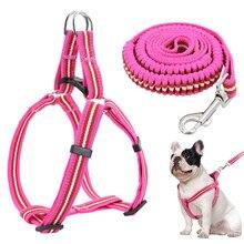 Что лучше: поводок, рулетка или шлейка для прогулки с собакой