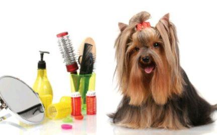 Стрижка собак: неотъемлемая часть обязательного ухода за шерстяным покровом домашнего питомца